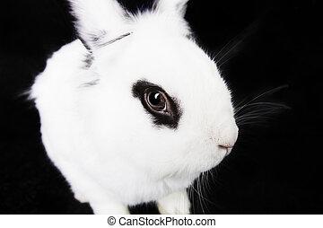 blanco, negro, conejo, plano de fondo