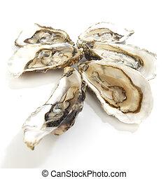 blanco, ostras
