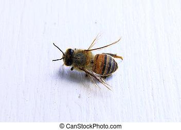 blanco, primer plano, plano de fondo, abeja