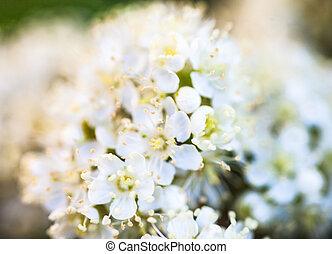 blanco, rowan, flores