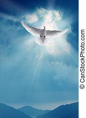 blanco, santo, paloma, vuelo, en, cielo azul
