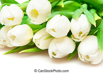 blanco, tulipanes