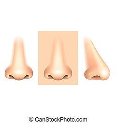 blanco, vector, nariz, aislado