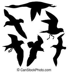 blanco, vuelo, silueta, ba, aves