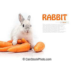 blanco, zanahoria, conejo