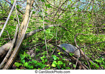 Blandings Turtle Resting on Land