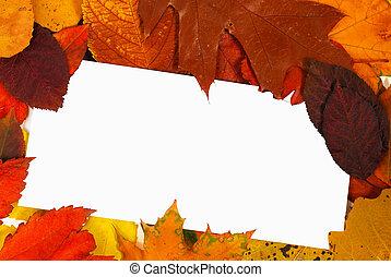 Blank card in leaves