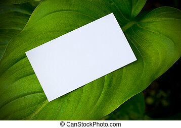 blank card over a reen leaf, natural background