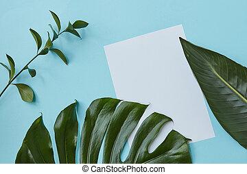 Blank copy space