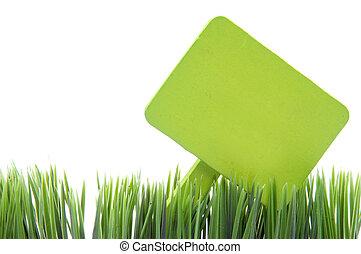 Blank Green Sign in Fresh Grass