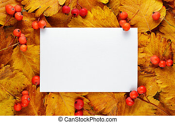 Blank greeting card on hawthorn autumn leaves and berries