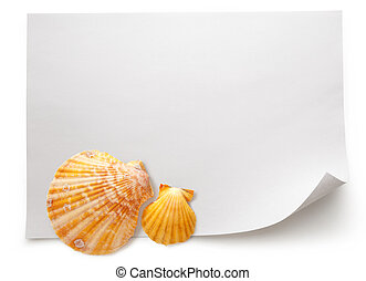 Blank sheet of paper with seashells