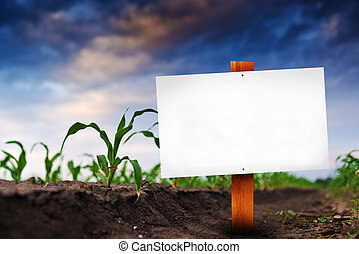 Blank sign in corn agricultural field in early spring, ...