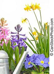 blank vår blommar