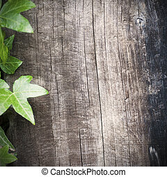 blank wooden background with ivy frame at the left side, ...
