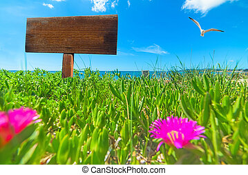 Blank wooden sign on a green field