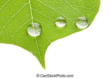 blatt, bewässern tropfen, durchsichtig, grün