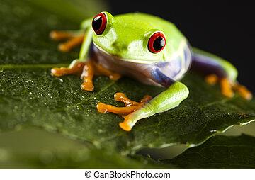 blatt, frosch