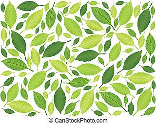 blatt, hintergrund, grün