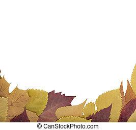 blatt papier, auf, a, herbst, leaves.