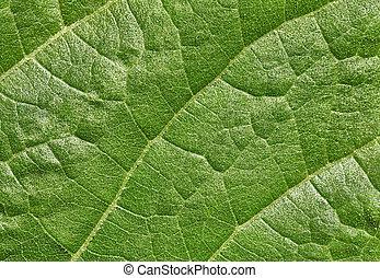 blatt, von, pflanze, oberfläche, hintergrund
