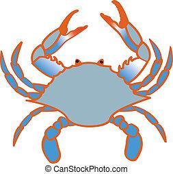 blaue krabbe