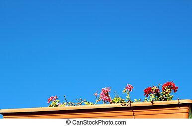 blauer himmel, mit, farbenfreudige blumen