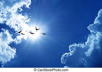 blauer himmel, mit, fliegendes, vögel, natürlich,...