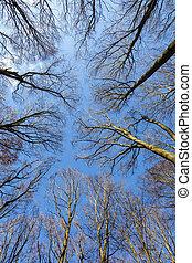 blauer himmel, mit, struktur, von, wald, in, winterzeit