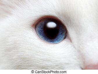 blaues auge, weißes, katze