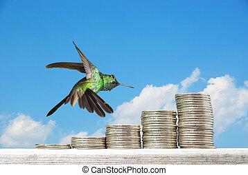blaues, backgr, hämorrhoiden, aus, geldmünzen, himmelsgewölbe, gegen, schweben, kolibri
