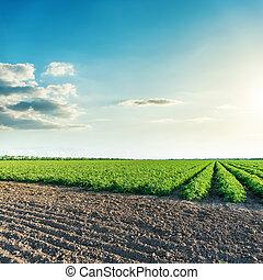 blaues, felder, aus, himmelsgewölbe, tief, sonnenuntergang, landwirtschaft