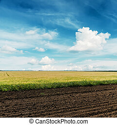 blaues, felder, landwirtschaft, himmelsgewölbe, tief