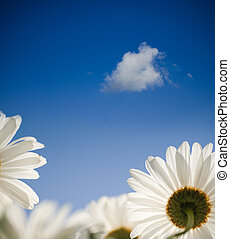 blaues, frühjahrsblumen, himmelsgewölbe, gänseblumen