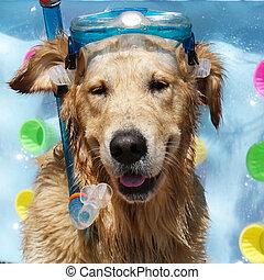 blaues, goldenes, baden, rohr, apportierhund, airbed, ...