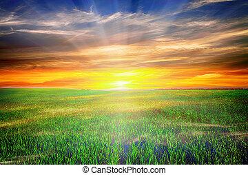 blaues, himmel, beatiful, morgen, feld, grün