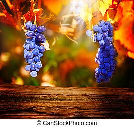 blaues, holzbrett, trauben, front