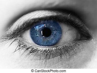 blaues, iris, auge, aus, schwarz, white., closeup