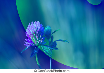 blaues, kleeblat, abstrakt, blume