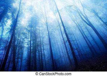 blaues, neblig, holz, dämmerung, stimmung
