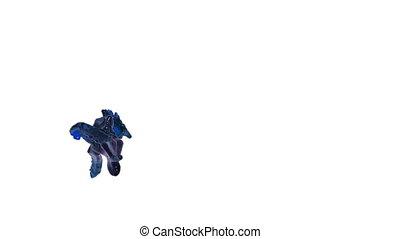blaues, oel, fließen, abstrakt, background.., flüssigkeit, weißes