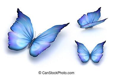 blaues, papillon, weißes, freigestellt