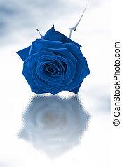 blaues, rose, ledig
