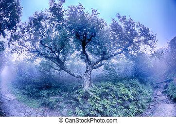 blaues, sceni, bergrücken, nc, herbst, felsig, nord, allee, gärten, carolina