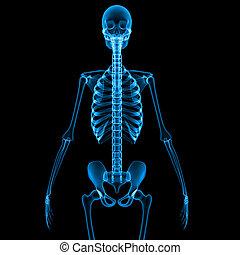 blaues, skelett, hälfte