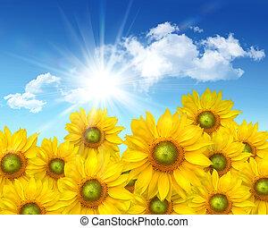 blaues, sommer, großer himmel, gegen, sonnenblumen