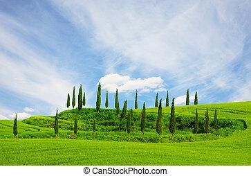 blaues, toscana, himmelsgewölbe, wolkenhimmel, feld,...