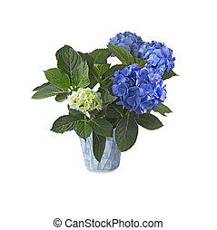blaues, weißes, (hydrangea), hortensia, hintergrund