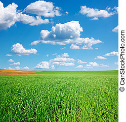 blaues, weizen- feld, himmelsgewölbe, kumulus, grün