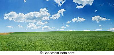 blaues, weizen, panorama, himmelsfeld, grün